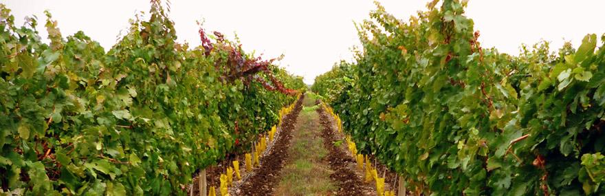 administracion-viticola2