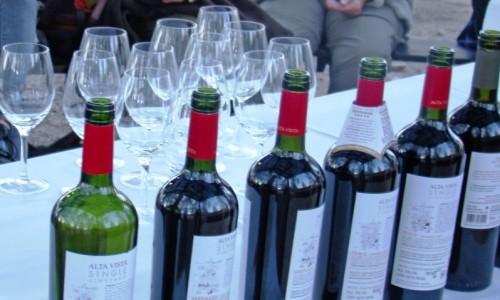 Actualidad y futuro del sector vitivinícola
